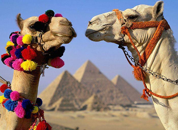 Прекрасная арабская страна – что посмотреть в Египте?