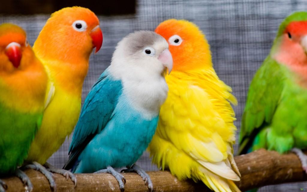 Как выбрать попугая и научить его говорить?