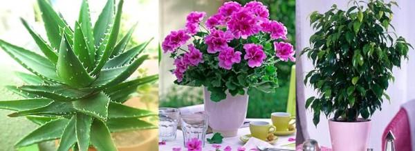 Как вырастить цветы дома?